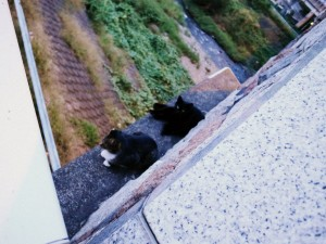 cats_9960