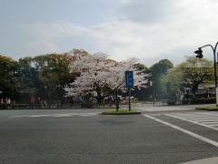 2011_sakura_0197.jpg