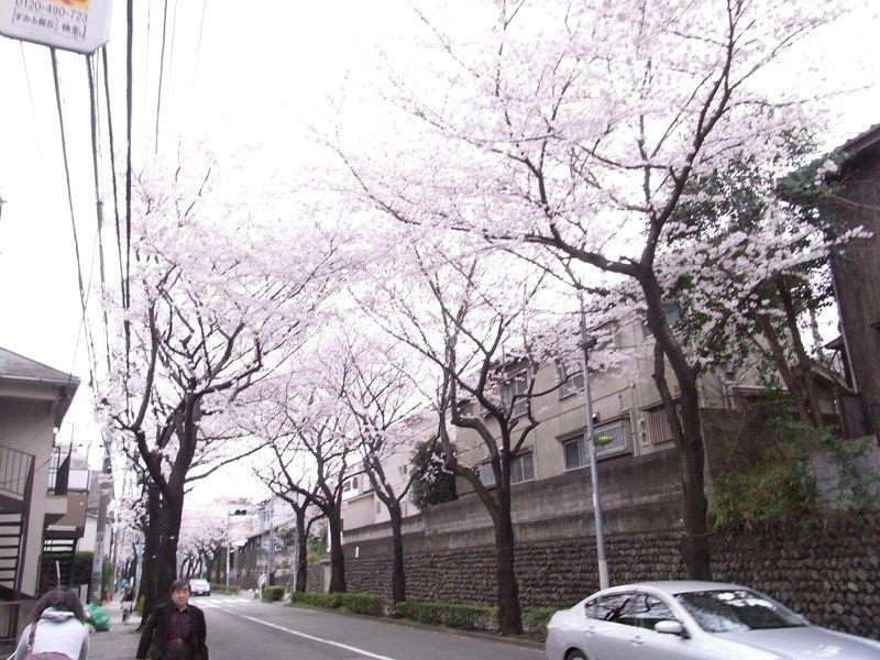 2010_sakura_0130.JPG
