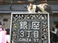 ginza_cat_0022.jpg