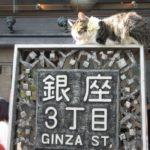 銀座三丁目のネコ