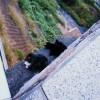 永山のル・ジャルダンブルーと、連光寺坂の猫達
